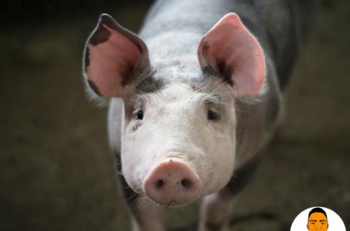 Article : Méchant Beau-Père part 2 : Le cochon qui vivait dans nos toilettes